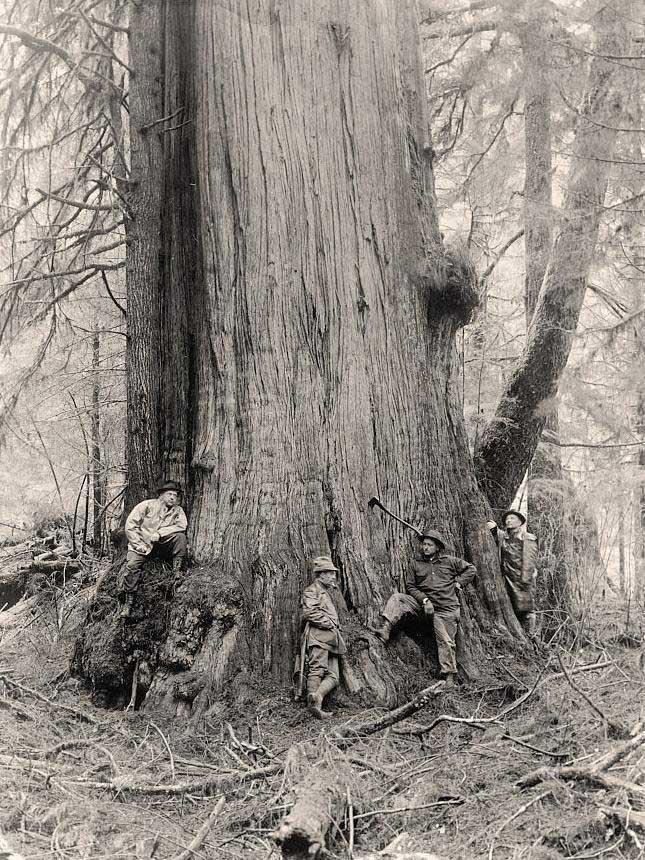 Lumberjacks 1
