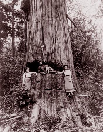 Lumberjacks 2