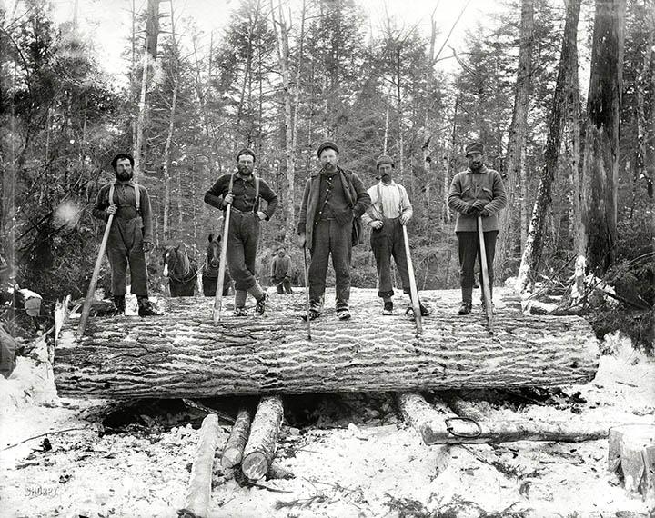 Lumberjacks 3