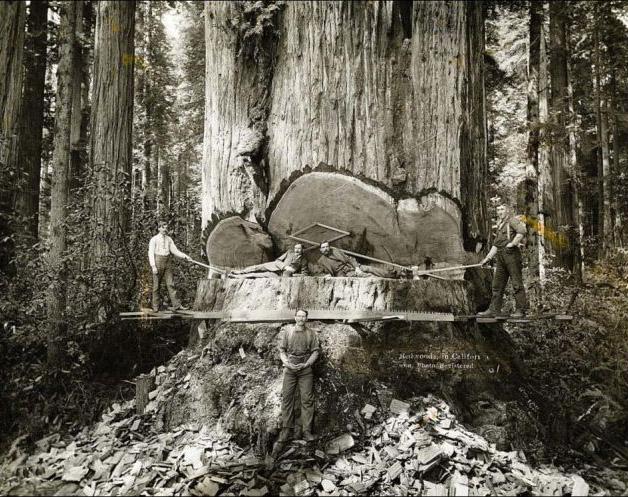 Lumberjacks 4