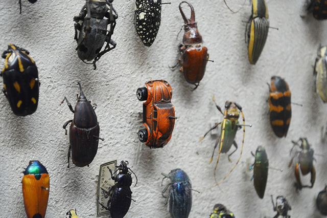 A-World-of-Beetles-1