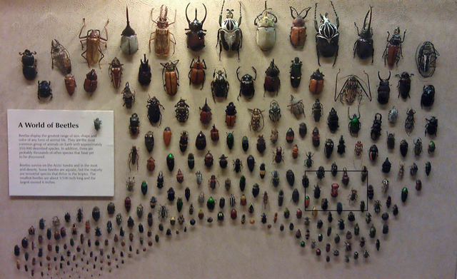 A-World-of-Beetles-2