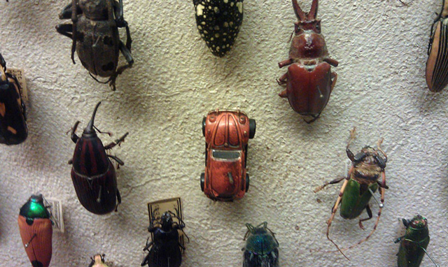 A-World-of-Beetles-3