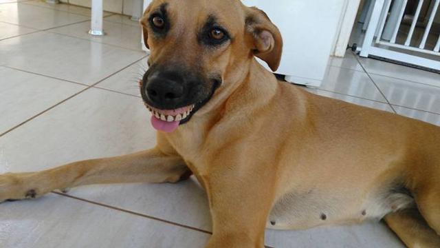 Dog-wearing-dentures-2