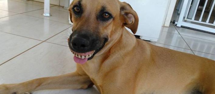 Dog-wearing-dentures-featured