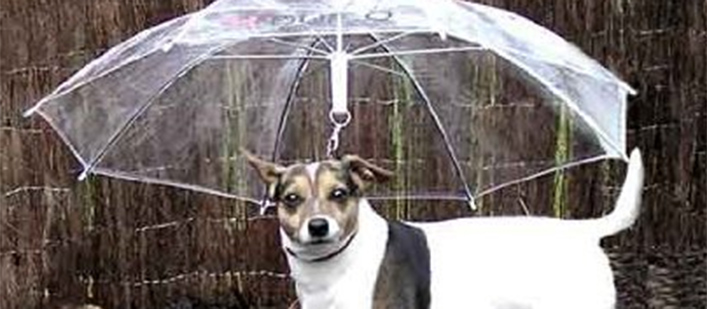 Featured-dogbrella