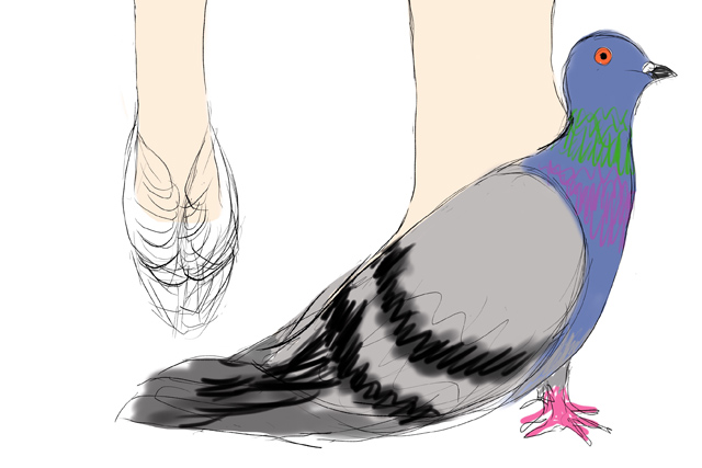Pigeon Shoes 7