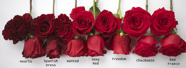 Red-Roses-Hearts-Spanish-Dress-Wanted-Sexy-Red-Freedom-Checkmate-Red-France