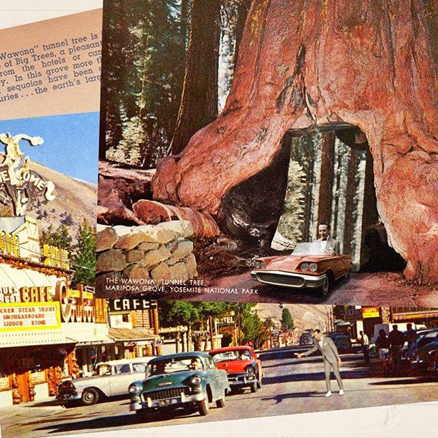 Redwood Pee-wee