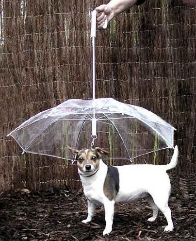 Dogbrella, the dog umbrella