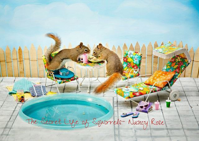 Secret-Life-of-Squirrels-bbq