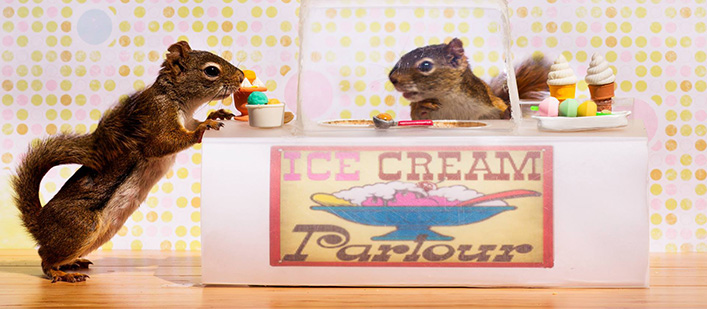 Secret-Life-of-Squirrels-ice-cream-featured
