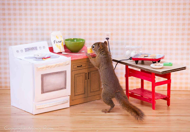 Secret-life-of-squirrels-kitchen