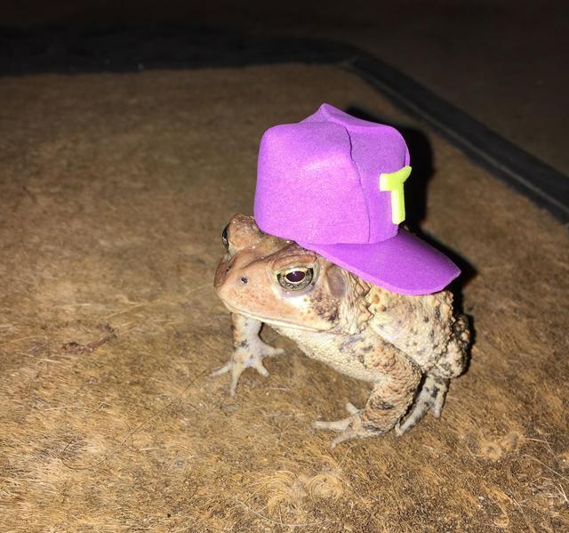 Toad-cap