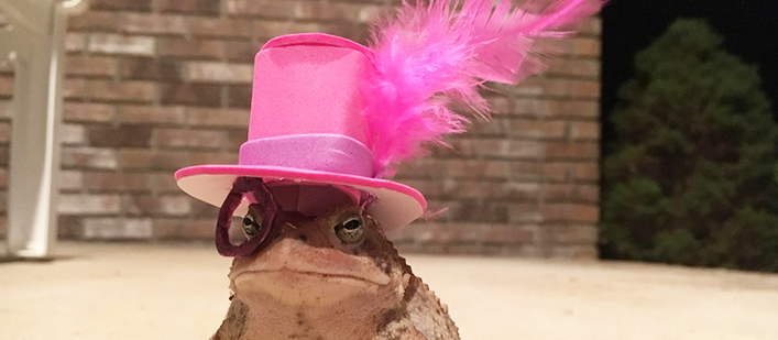 Toad-feather-top-hat-featured
