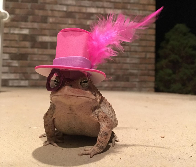 Toad-feather-top-hat