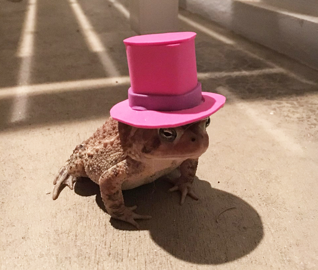 Toad-top-hat