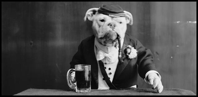 dog-bartender