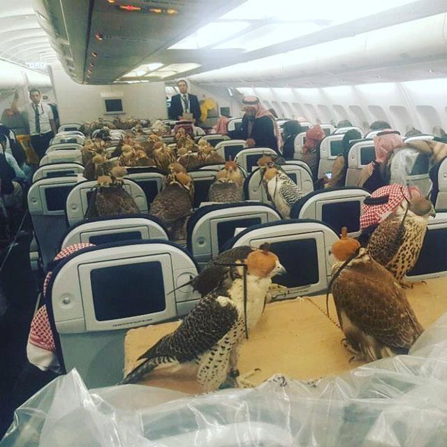 falcons-on-a-plane-social