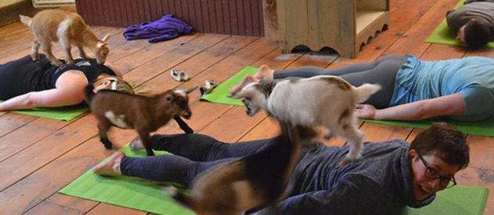 goat-yoga-featured