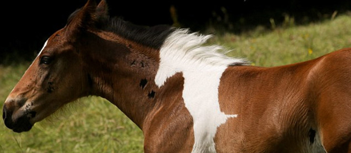 horse-with-horse-marking-featured