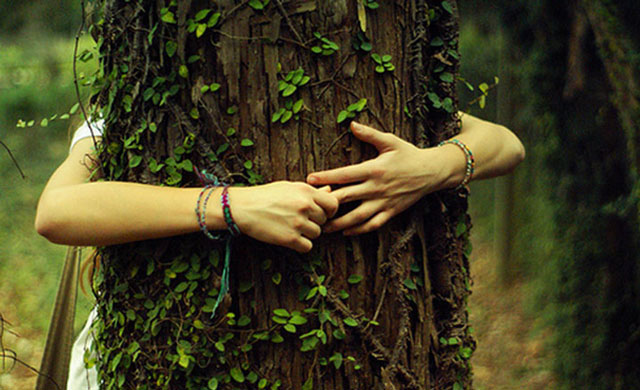 hug-a-tree-social