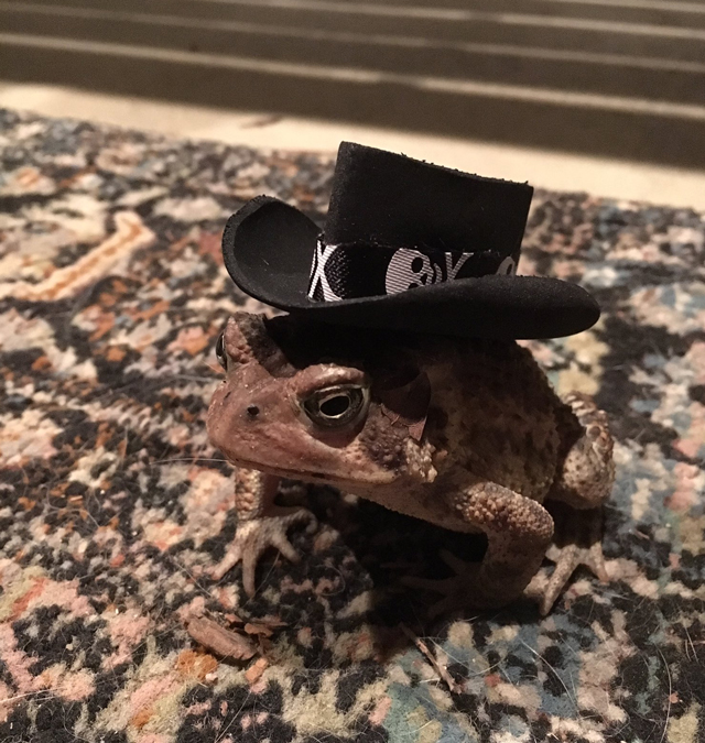 af9745725 A Guy is Making Tiny Hats For a TOAD That Visits Him!! - Pee-wee's blog