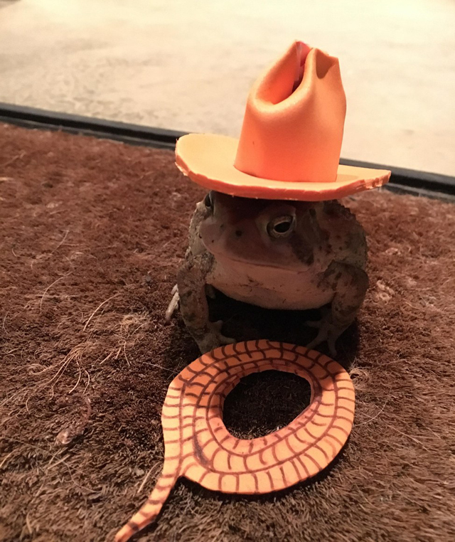 toad-cowboy