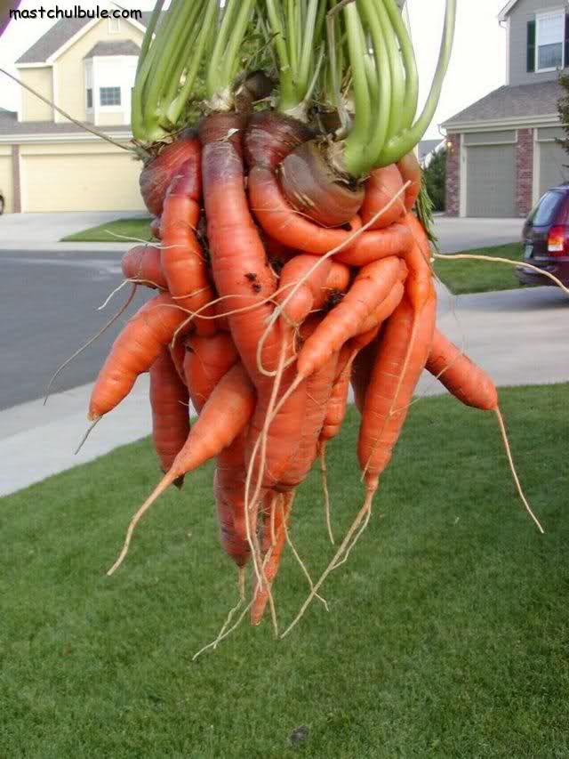 uh oh carrots
